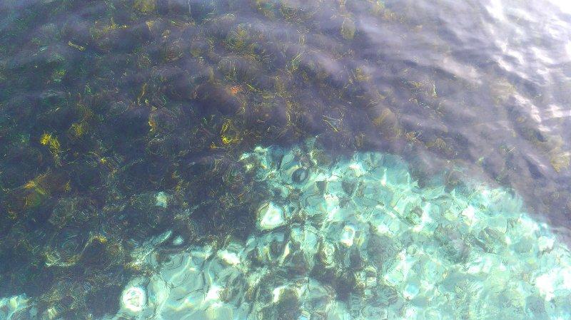 透き通った海