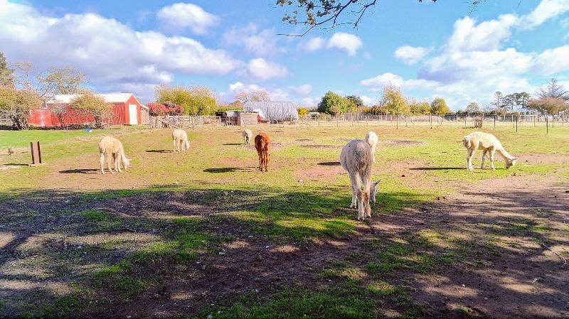宿裏手の牧場