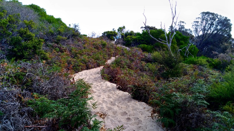 砂の坂道。とても歩きにくい。
