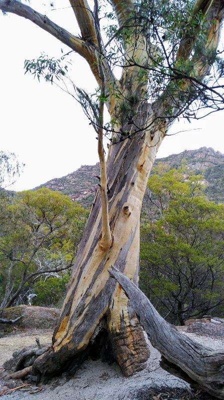 ねじれたように伸びる樹木