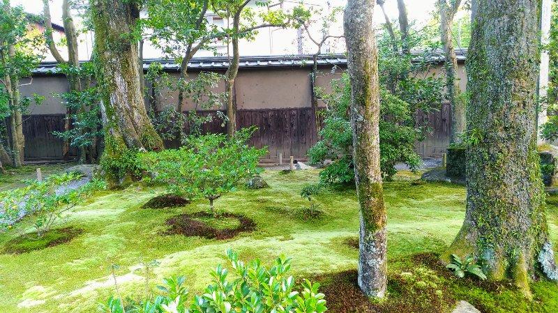 苔生すお庭の地面